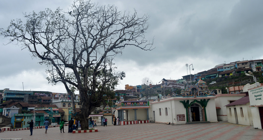 kodaikanal-village-tour-package