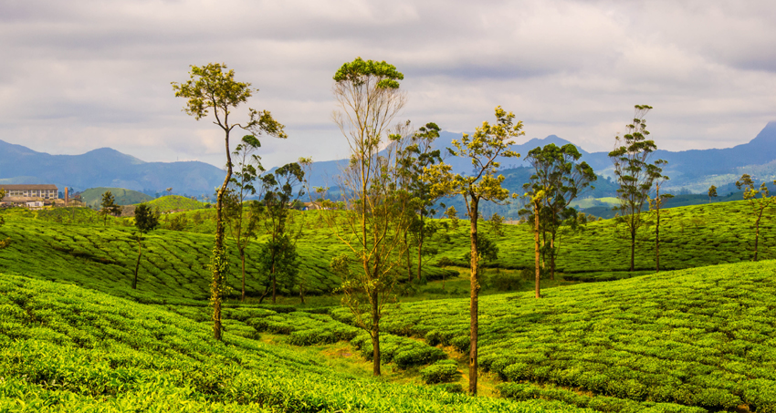 valparai-hills-tour-package1